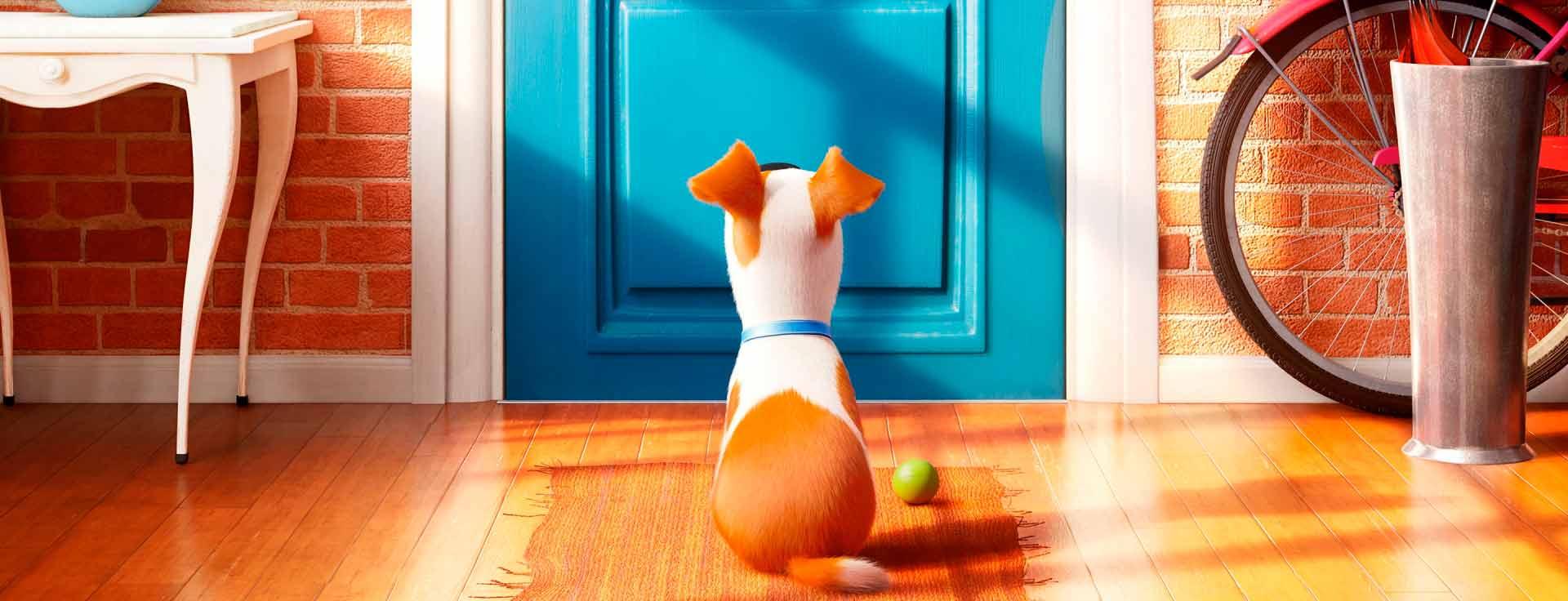 Moderno Mascotas Para Colorear Ornamento - Ideas Para Colorear ...